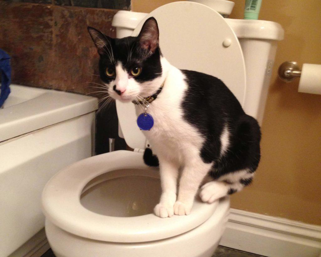 cat-toilet-traning