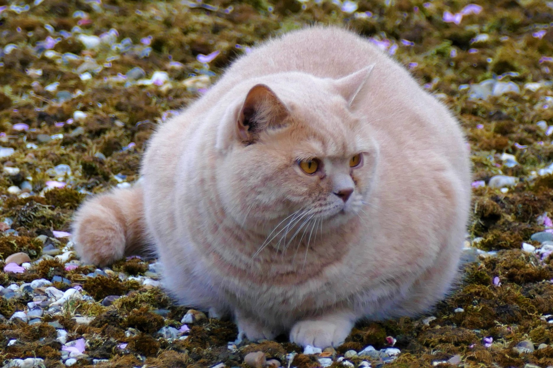 Best Low Calories Cat Food Review And Buying Guide