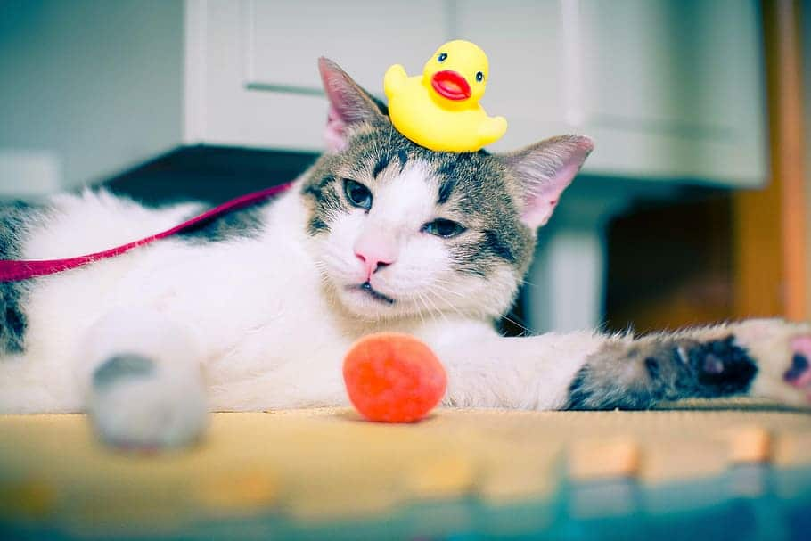 How To Choose The Cat Toy