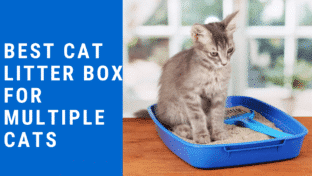 Best Cat Litter Box For Multiple Cats