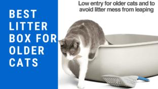 Best Litter Box For Older Cats
