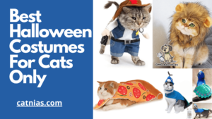 best-halloween-costumes-for-cats-only