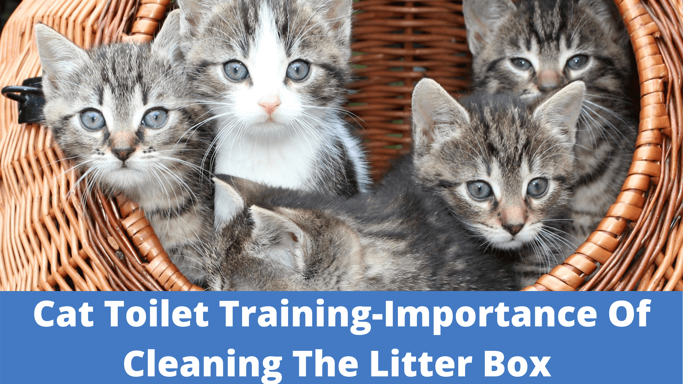 Cat-Toilet-Training-Importance-Of-Cleaning-The-Litter-Box 0 to Hero (1)