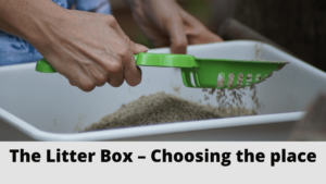 The-Litter Box – Choosing-the-place