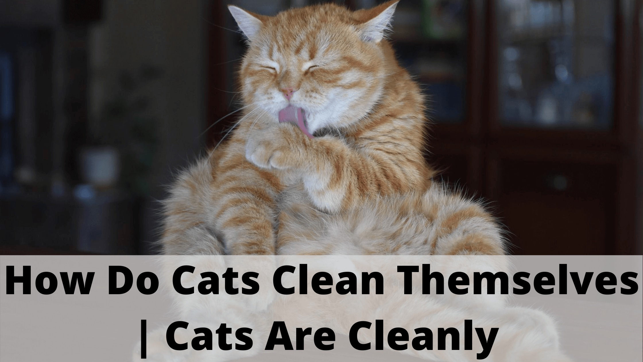 how-do-cats-clean-themselves-cats-are-cleanly